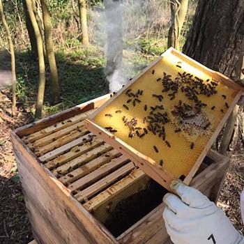 Bienepatenschaft Wilma Wunder